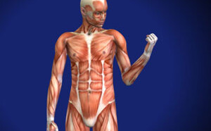 Muscle Imbalance in the Shoulder